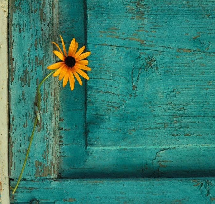 yellow daisy with teal background