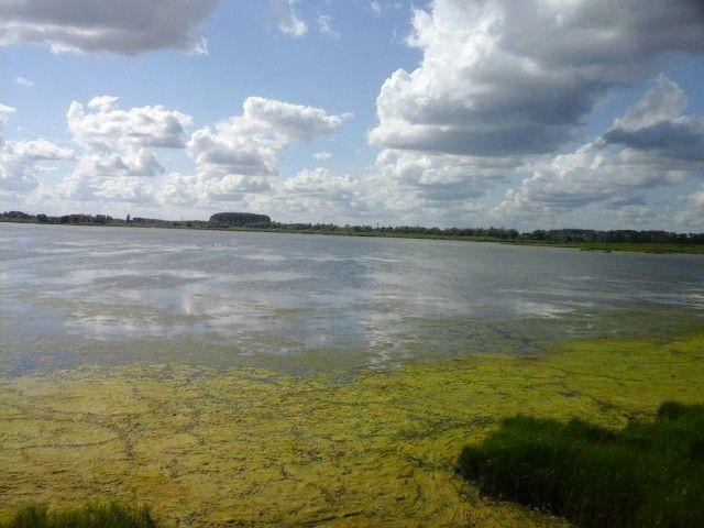 Nature @ biesbosch