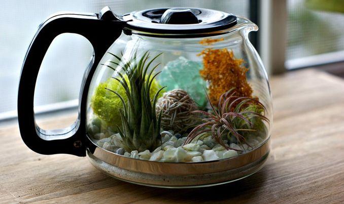Mini Terrarium -  DIY Treibhaus: Der Dschungel in der Kaffeekanne…