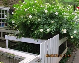 Over Abundance of Blooms!