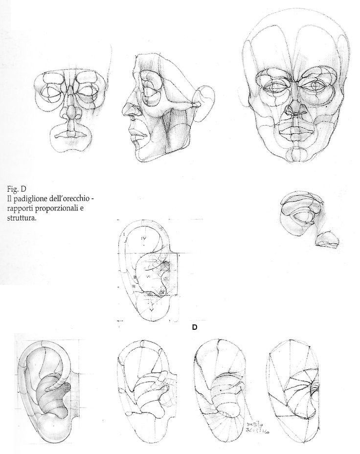 Character Design Challenge Themes : Best images about character anatomy ears on pinterest
