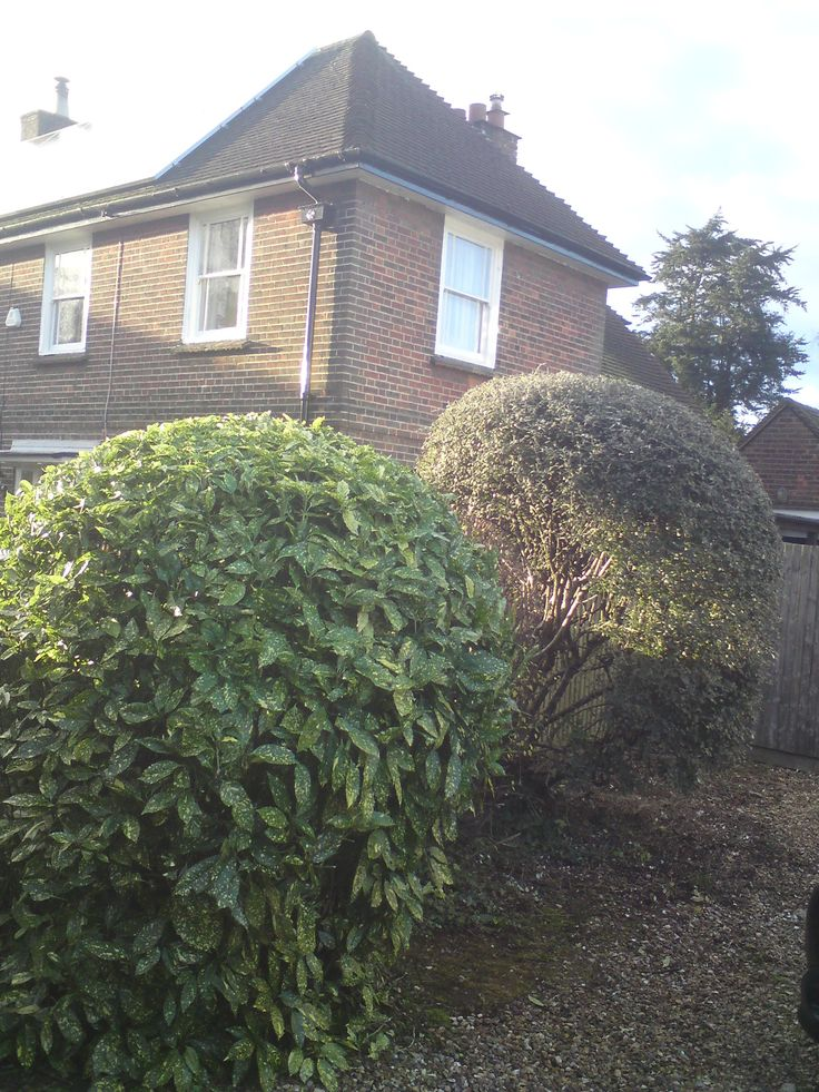 Hedge cutting in Terriers , High Wycombe  This hedge cutting job was done few days ago in Terriers , High Wycombe. There was few hedges which required some trimming and shaping. This is how the looked like before   And this is how the look like now  Be Sociable, Share! Tweet