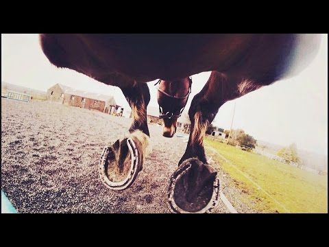 Go pro under horse jumping