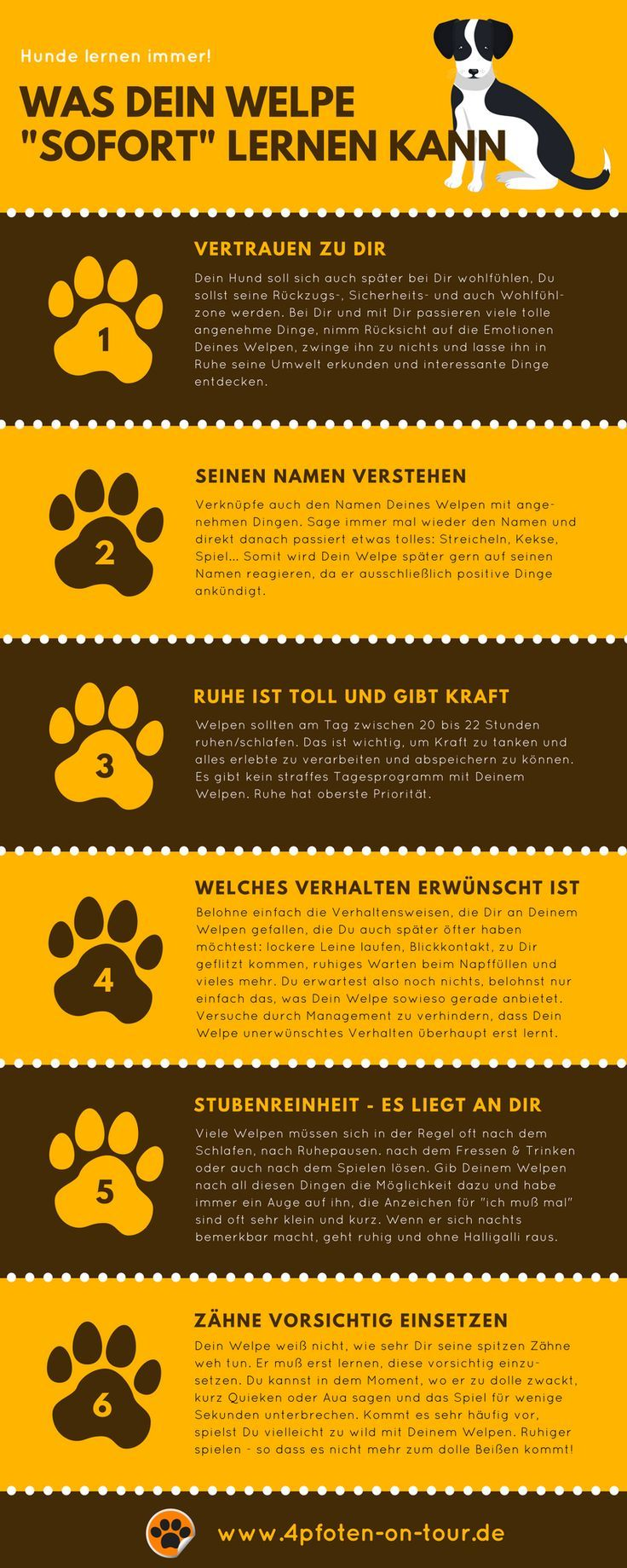 Helpful tips for the way to housebreaking – for puppies and adult dogs! Tip 1: Many puppies usually have to … often …