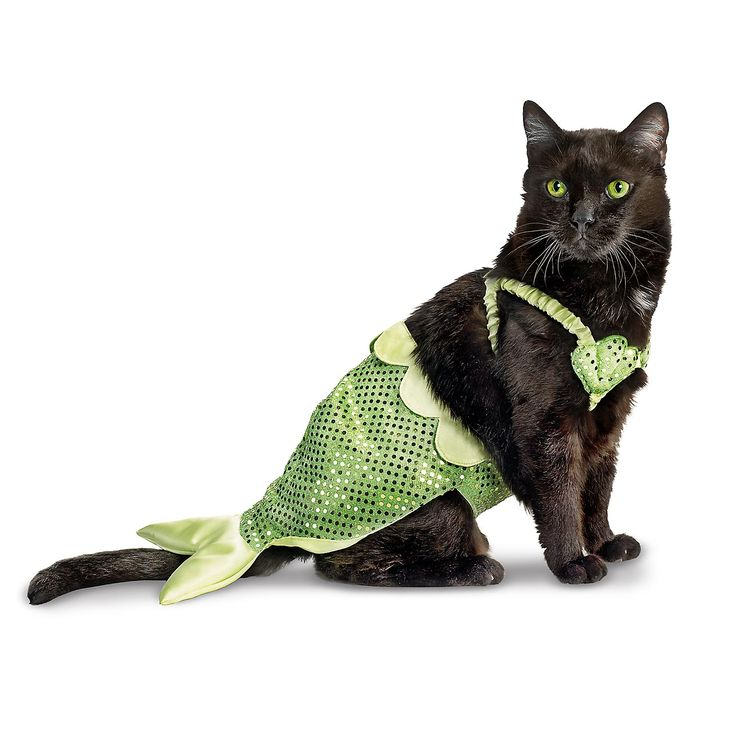 Petco Mermaid Halloween Costume for Cats Hahahaha! Which cat would wear this? I think Punky and Ginger are too fat to fit.
