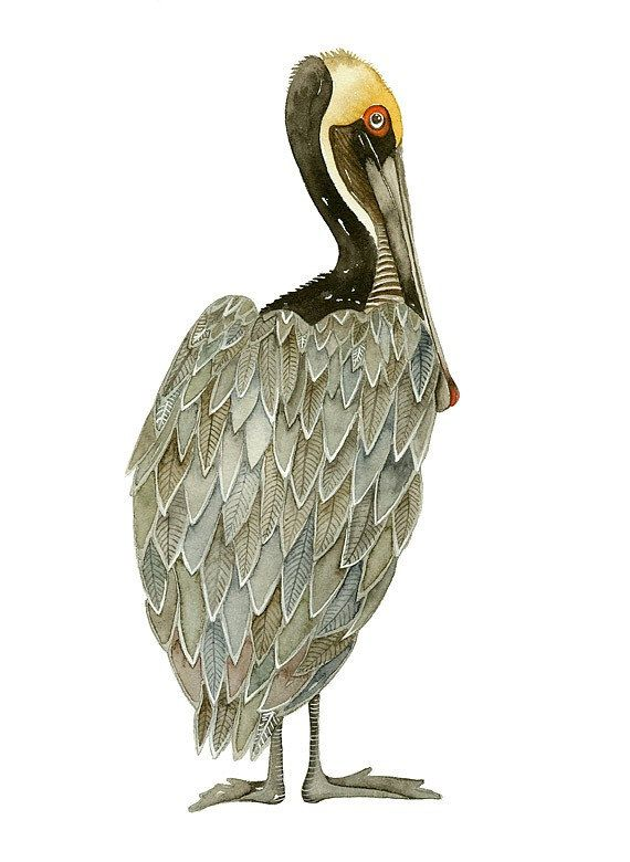 PELICAN Art Watercolor Painting by Lorisworld - 5x7 Bird Print, Limited Edition