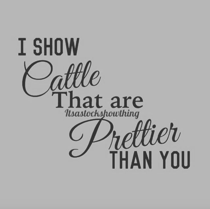 I show cattle that are prettier than you.