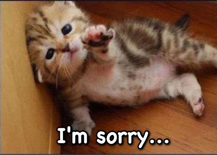 9a0b42b4f43216e9a8fb3825ab2af08c memes 12 best memes ~ sorry! images on pinterest memes, board and cat,Im Sorry Meme