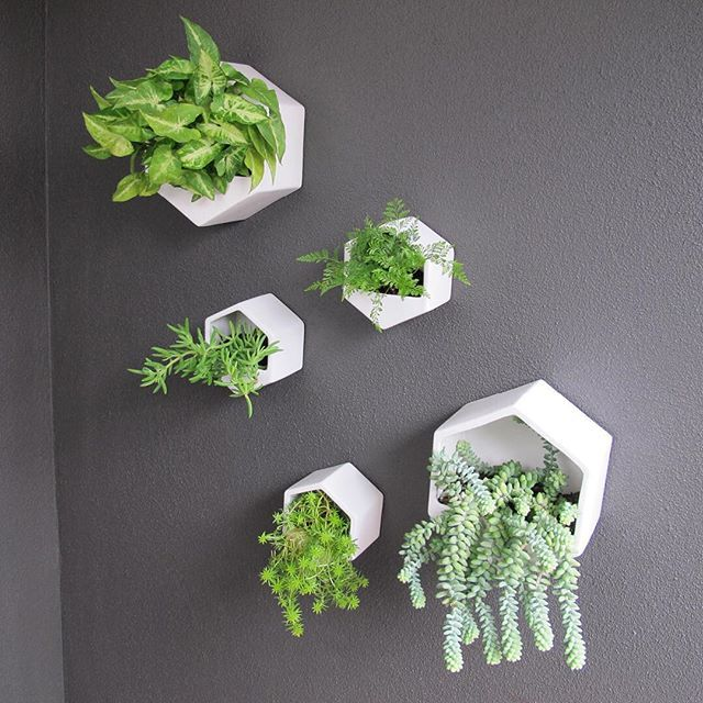 Where there's a wall there's a way.  Scroll for details ↓  Hexagon wall planter › @little_mash  Price › small $25 NZD, large $50 NZD  Explore › #GeorgeAndCo #WallPlanters #Succulents #ApartmentLiving #Homewares #HomeDecor #HomeInspiration #HomeStyling #OurFirstApartment