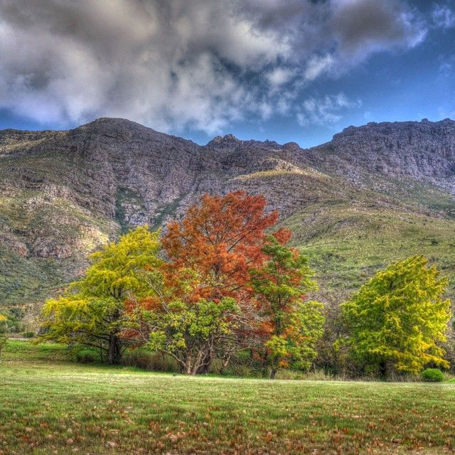 The colours of Autumn. Took this last year I think at #Jonkershoek.