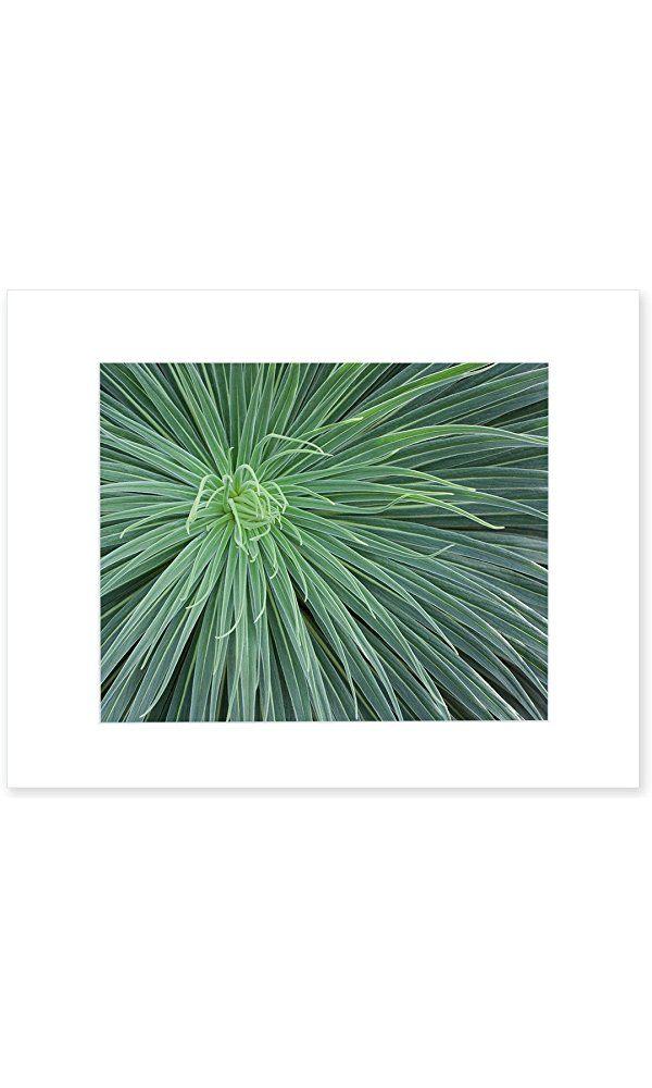 8x10 Matted Print, Abstract Green Botanical Wall Art, 'Desert Fireworks' Best Price