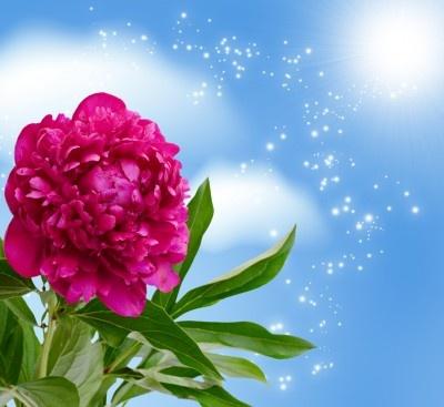 Una de las flores que se encuentra de moda, la peonía.