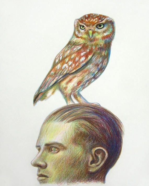 Man with Owl on head, drawing, colored pencil portrait, original, commission portrait art