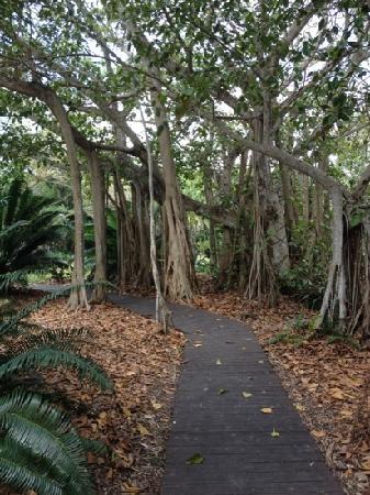 Marie Selby Botanical Gardens Sarasota Fl Florida