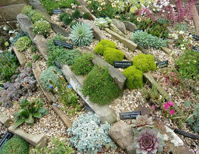 48 Best Rock And Trough Gardens Images On Pinterest Succulents Adorable Alpine Garden Design