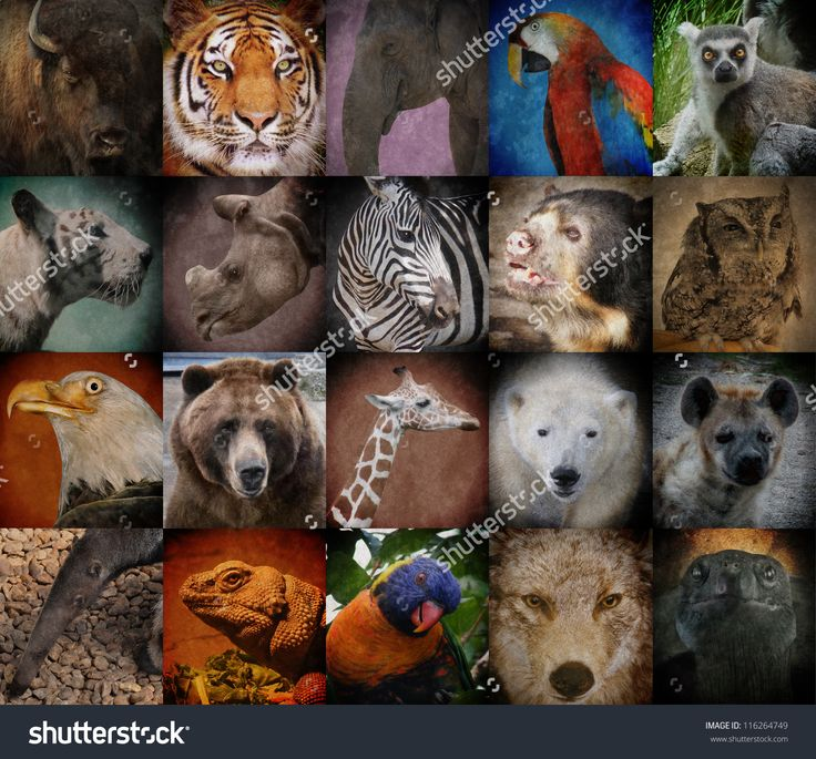 Endangered Animals Stock Photos, Images, & Pictures | Shutterstock