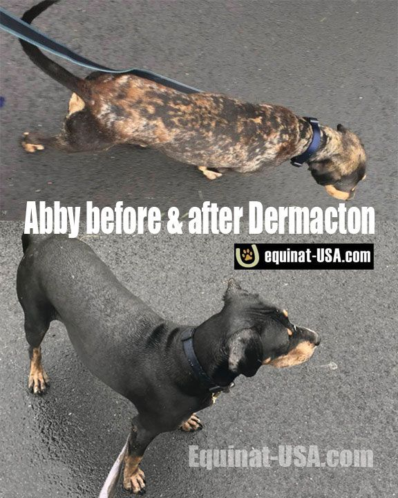 Skin Issues Transformed In 4 Weeks Itchy Dog Dog Skin Allergies