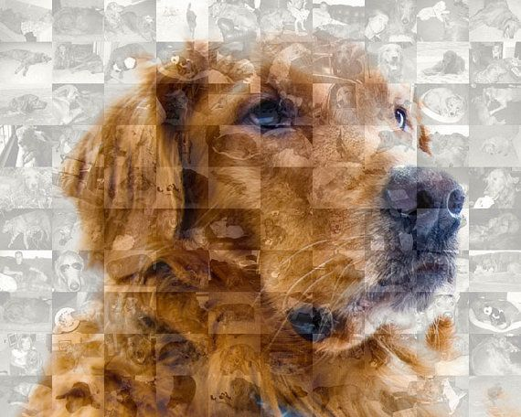Golden Retriever Dog Custom Wall Art - Personalized Photo Collage Mosaic of Your Golden (8x10 or 10x10)