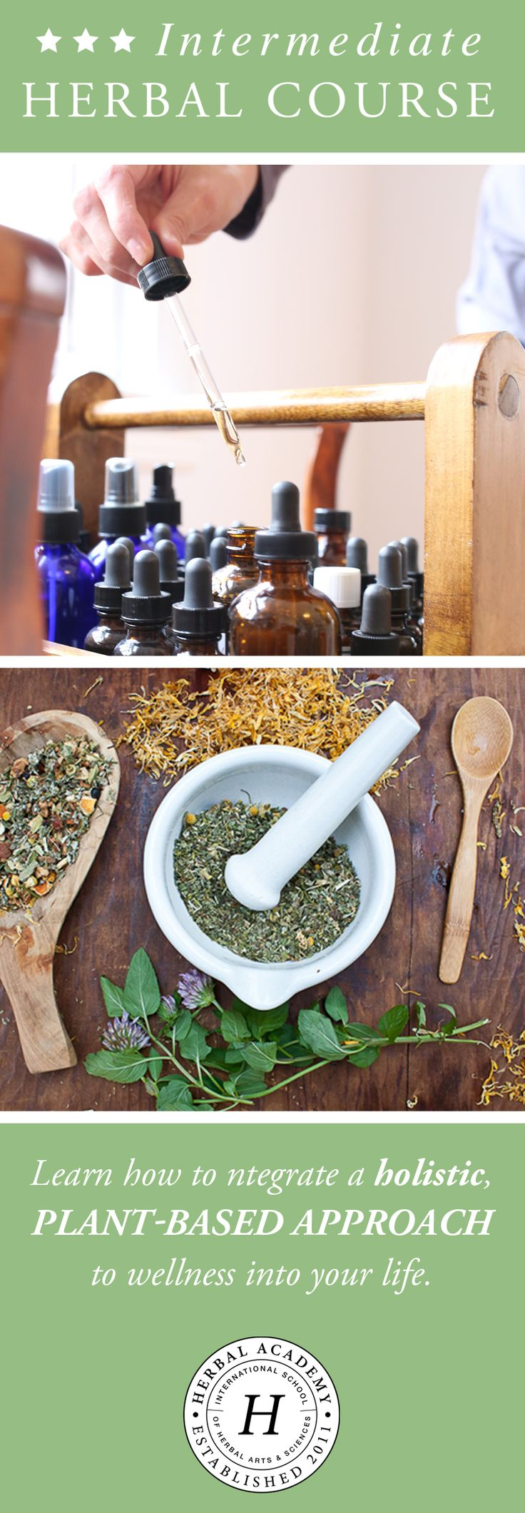 Learn a plant based approach to healing with the Herbal Academy. The Intermediate Herbal Course is an online and self-paced apprenticeship for distant learners. Diverse and thorough, the courses cover topics such as herbal actions, energetics, safety and side effects; discussions about constitutional theory; in-depth coverage of physiology and body systems; food as medicine, and guidance for herbal therapeutics and formulation with plenty of remedies and recipes! Visit to learn more!