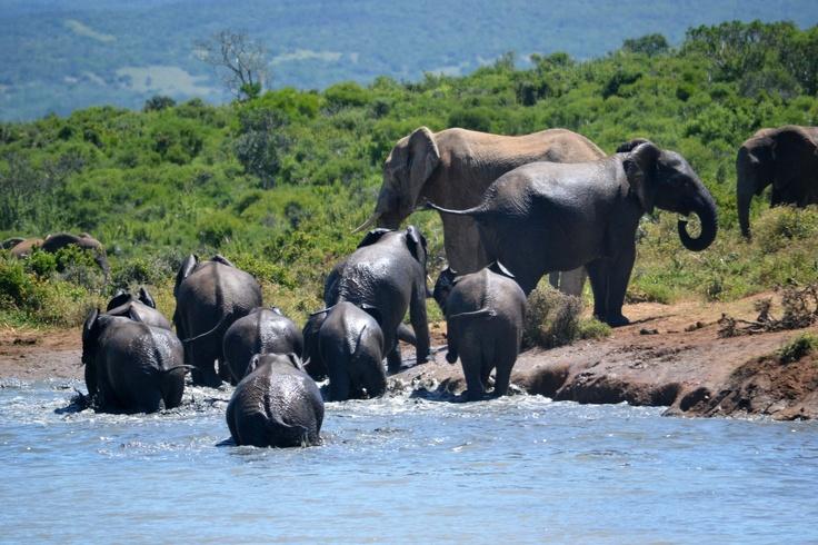 820 Best Images Of Elephants Images On Pinterest