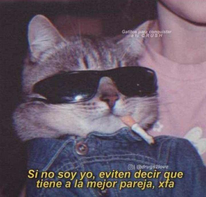 Pin De Alessia Delgado En Memes Memes Romanticos Meme Gato Gatos Bonitos
