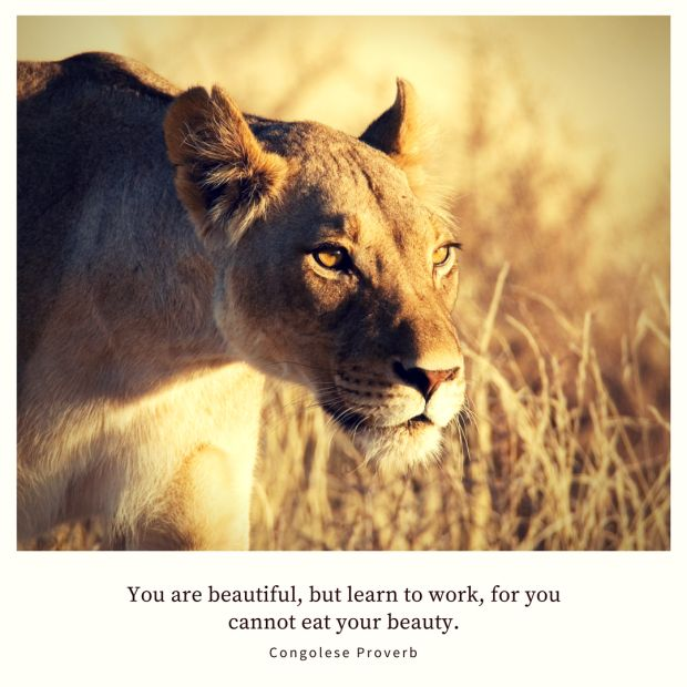 You are beautiful, but learn to work, for you cannot eat your beauty. – Congolese Proverb (picture of a beautiful lioness)