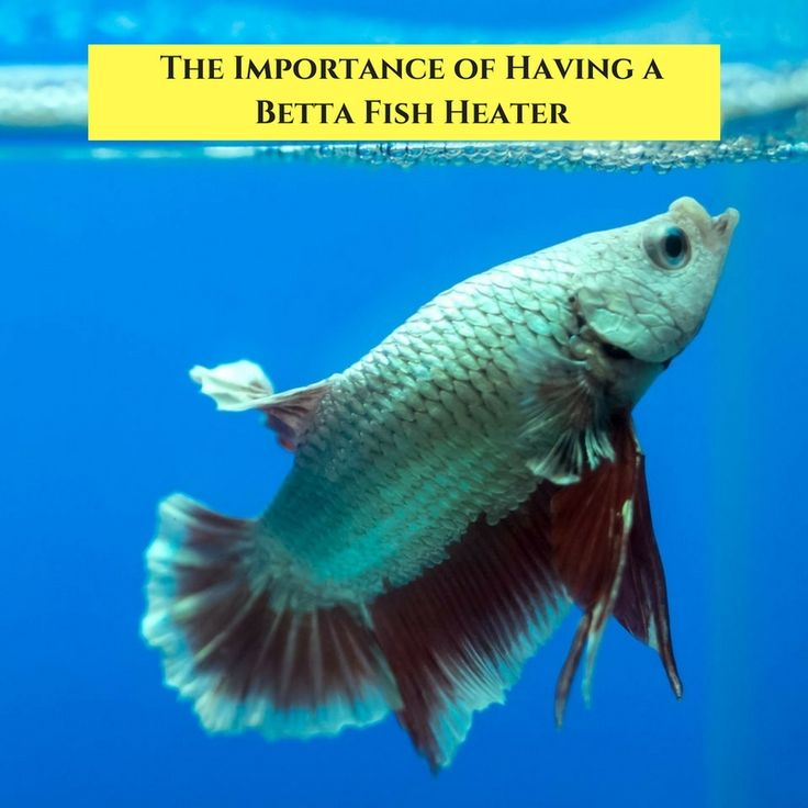 151 best betta fish tanks images on pinterest aquariums for Betta fish water heater