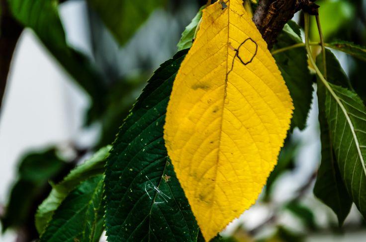https://flic.kr/p/21n4Etd | Autumn | Autumns