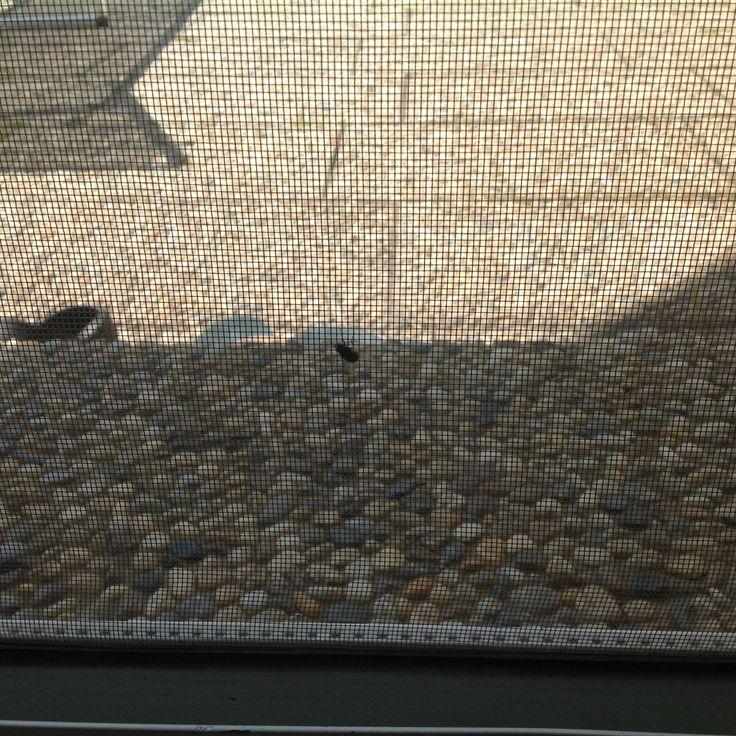 Moucha domácí Musca domestica doma