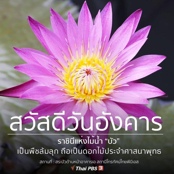 ถ กใจ 600 คน ความค ดเห น 5 รายการ Thai Pbs ไทยพ บ เอส Thaipbs บน Instagram สว สด ว นอ งคาร 6 ส ค 62 ขอให เช าน เป นเ ว นอ งคาร อร ณสว สด สว สด