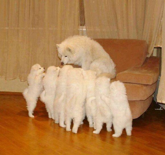 記事提供:カラパイア 犬の親子の心温まる写真が集められていた。お母さんの表情からは、「こんなにかわいい子がたくさん産まれたのよ!」っていう自信とそしてたっぷりの愛情がうかがえる。 お母さんたち本当にがんばった。子育ても大変だけど、子犬たちのたくさんの愛情が注がれているんだもん、毎日が充実するよね。