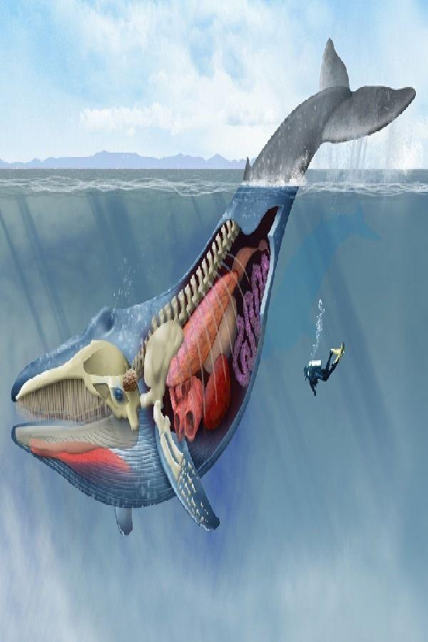 Blue Whale Mitmachen