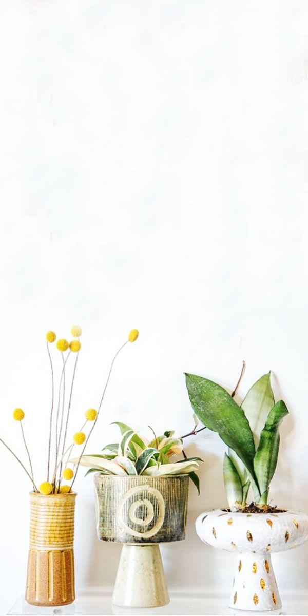 plants in ceramics