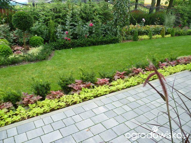 Anulajda w raju - strona 130 - Forum ogrodnicze - Ogrodowisko