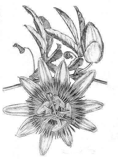 207 best Plantas: Propiedades medicinales images on