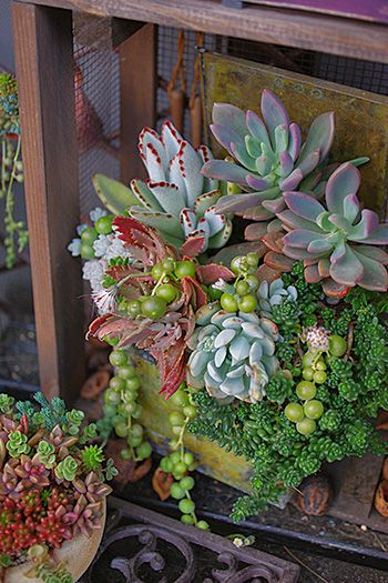 great container of succulents
