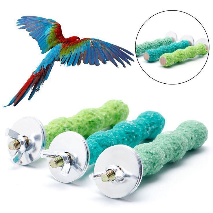 Colorful Pet Bird Cage Perch Stand Platform 2*8 Paw Grinding Parrot Parakeet for Small / Medium Sized Birds // FREE Shipping //     Get it here ---> https://thepetscastle.com/colorful-pet-bird-cage-perch-stand-platform-28-paw-grinding-parrot-parakeet-for-small-medium-sized-birds/    #catoftheday #kittens #ilovemycat #lovedogs #pup