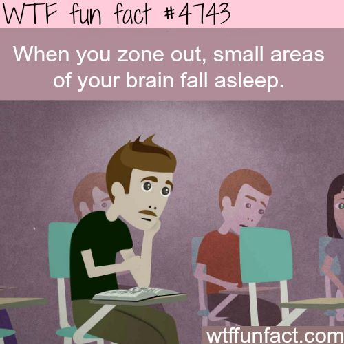 What happens to the brain when you zone out - WTF fun facts