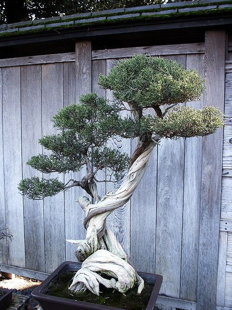Huntington Library Japanese Bonsai Garden 0078 | Flickr - Photo Sharing!