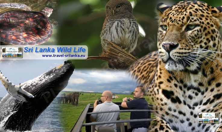 Explorer the Wild Life of Sri Lanka