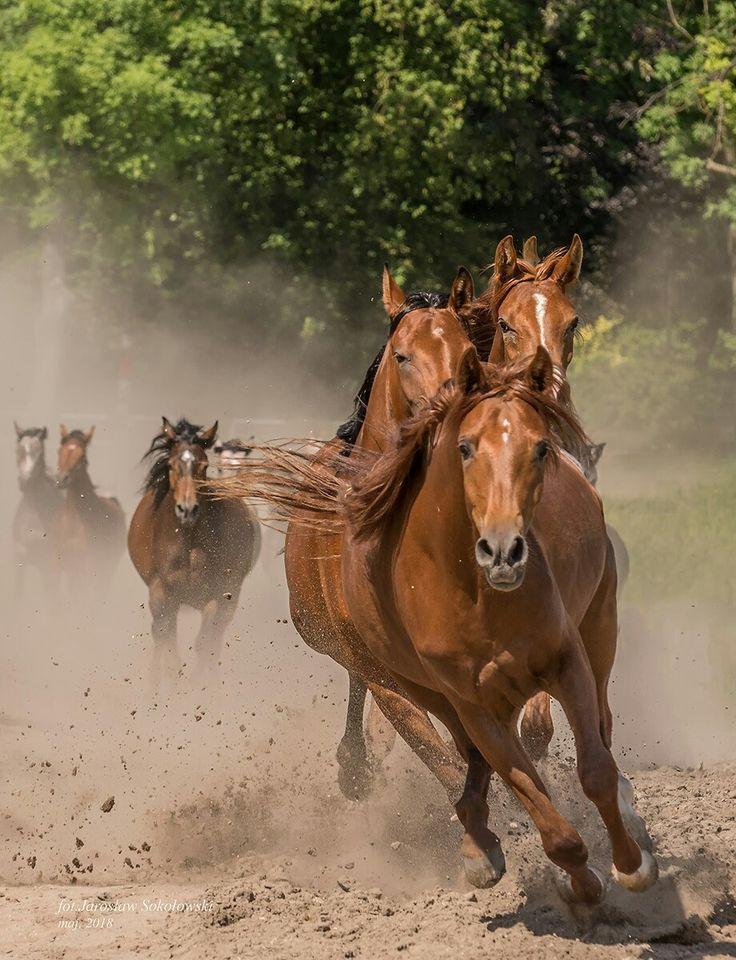 а кони все бегут картинки своему