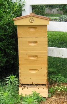 10 Free Bee hive Plans For Backyard Beekeeping | Backyard ...
