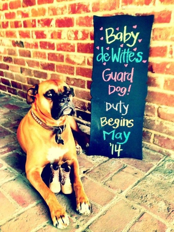 Adorable ways to include dogs in your #pregnancy announcement! #photography #pets
