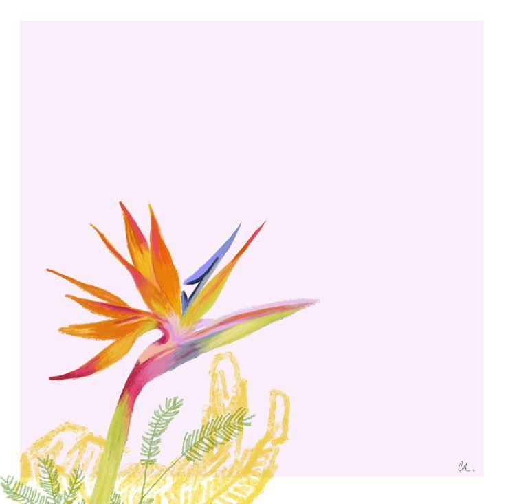 Tropical Flowers - Natalia CA