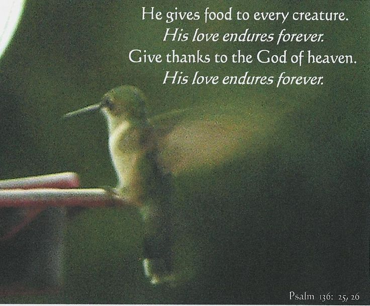 Psalm 136: 25-26 He gives food to every creature His love ...