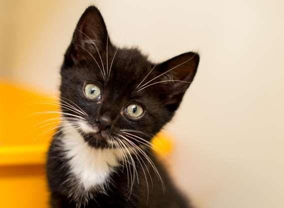 Kitten Sunny At Cats Protection Bridgend Rex Shutterstock Gatos Gatitos Adorables Fotos