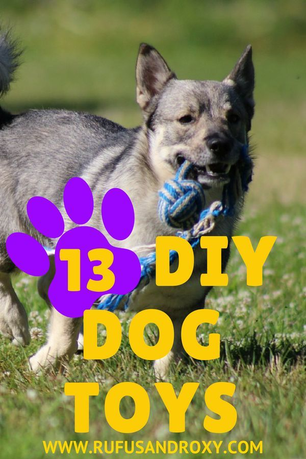 13 Easy Diy Dog Toys From Free Or Cheap Things Diy Dog Toys Dog