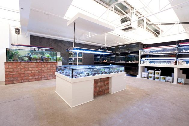 Saltwater Fish Store | Planning to open a marine fish store