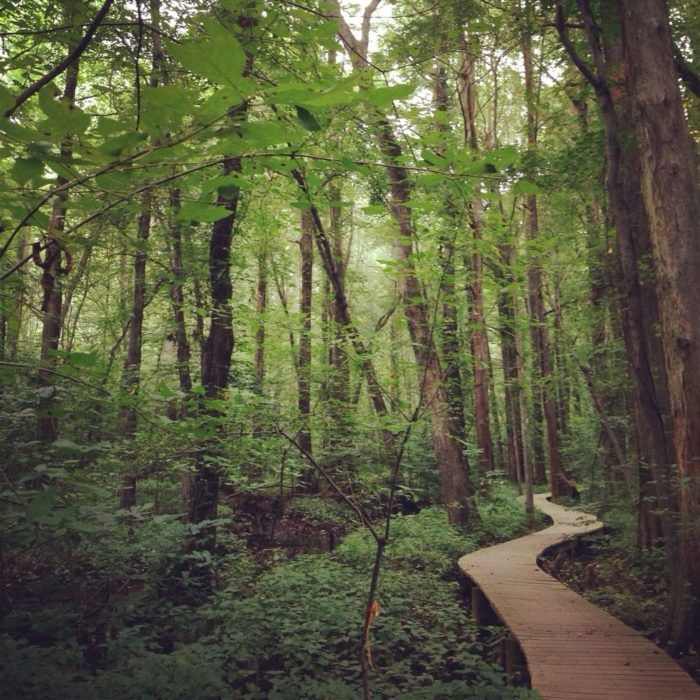 Battle Creek Cypress Swamp Sanctuary: Hidden in Prince Frederick lies a charming woodland paradise that not many people know about. 1/4 mile boardwalk trail