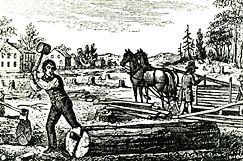 Primary source - indentured servants - click link below ...